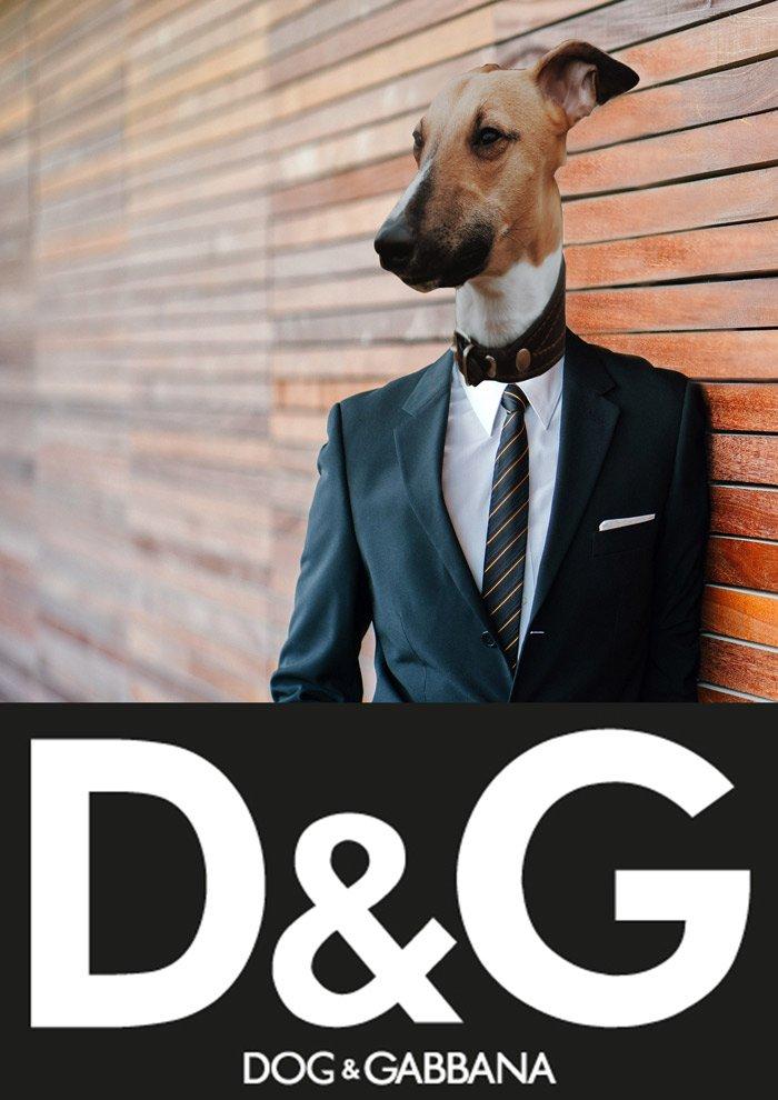 Best Dog Clothing Brands for Stylish